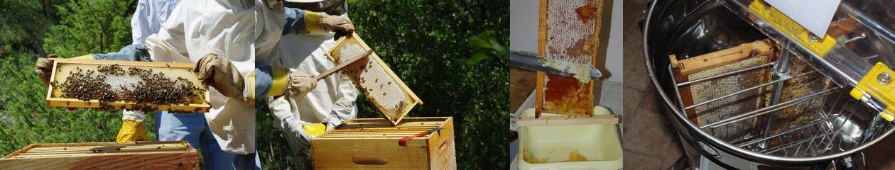Syndicat d'apiculture du Gard